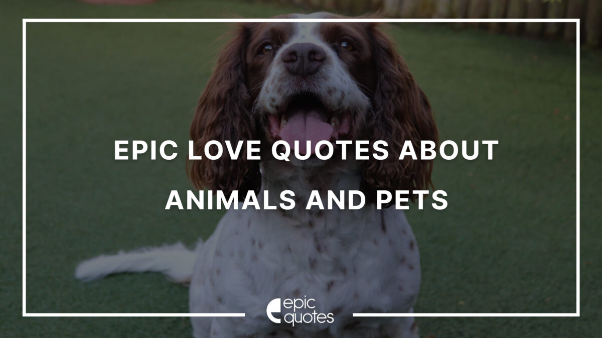 Love Quotes About Animals And Pets